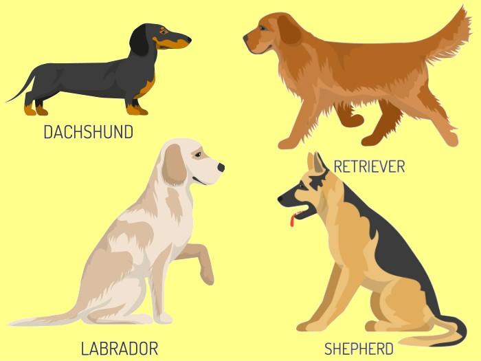 犬の種類と優しさ