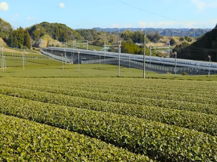 茶畑と新幹線